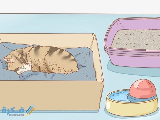 علامات حمل القطط في الاسبوع الاول