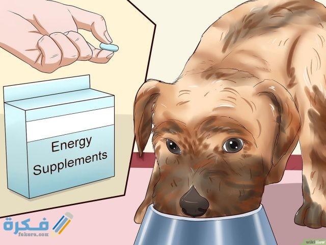 نصائح اساسية لتغذية الكلاب أثناء الحمل والولادة