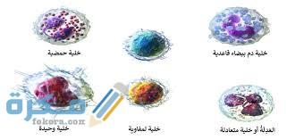 مكونات خلايا الدم البيضاء