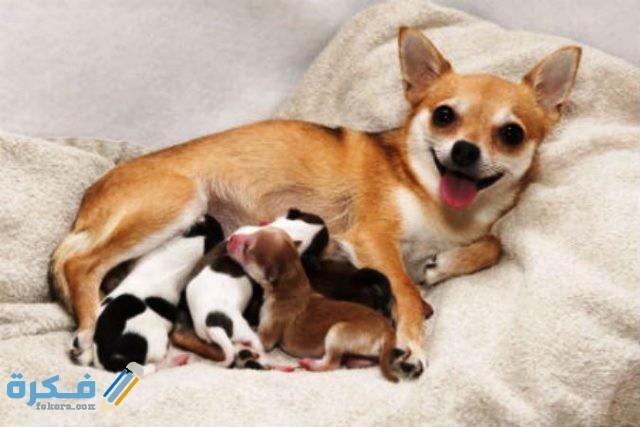 تغذية الكلاب بعد الولادة