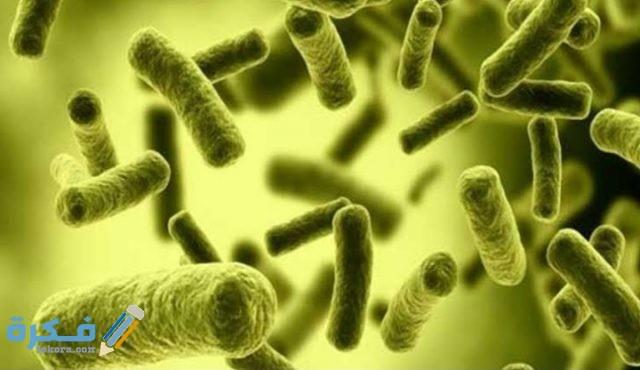 أين تباع البكتيريا النافعة؟ وما هي؟