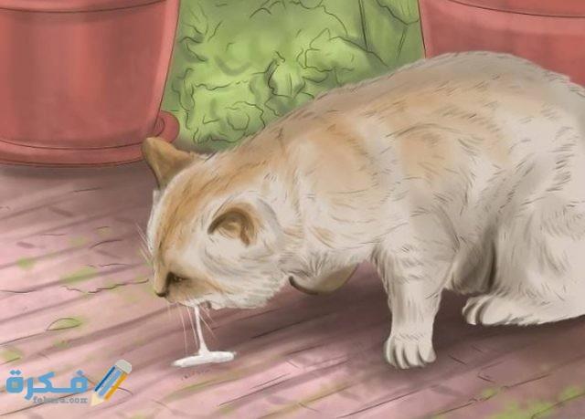 أدوية ترجيع القطط