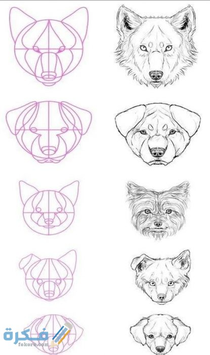 كيفية تعليم رسم الحيوانات البرية