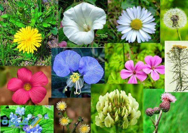 أهم خصائص الزهور