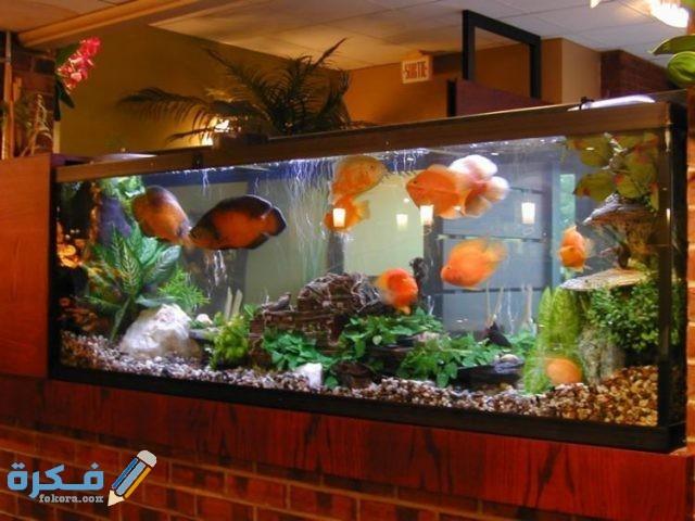 نصائح لتربية سمك الزينة