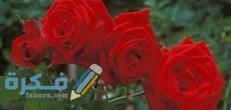 ما الفرق بين الورد المحمدي والسلطاني