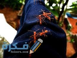 أسباب وجود النمل في الملابس
