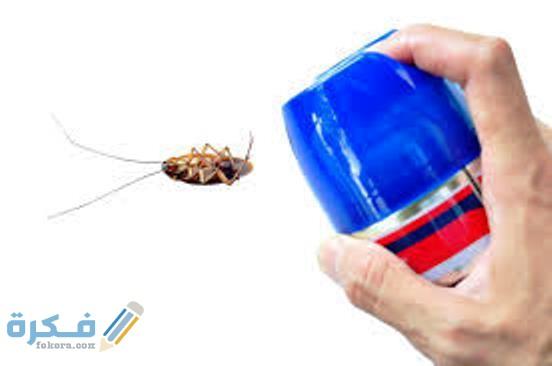 طرق الوقاية من الحشرات المنزلية