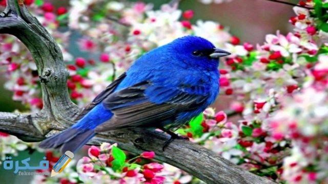 عوامل نجاح عملية التلقيح للعصافير