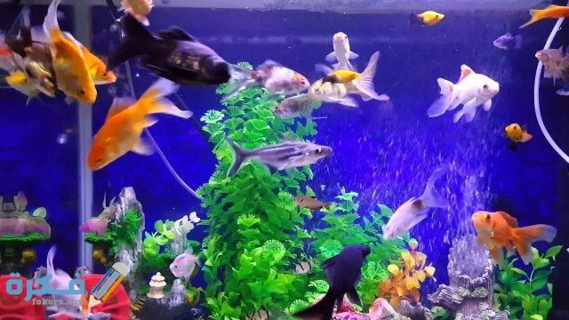 أهمية أحواض سمك الزينة في المنزل