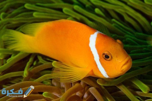 بحث عن الأسماك والبرمائيات
